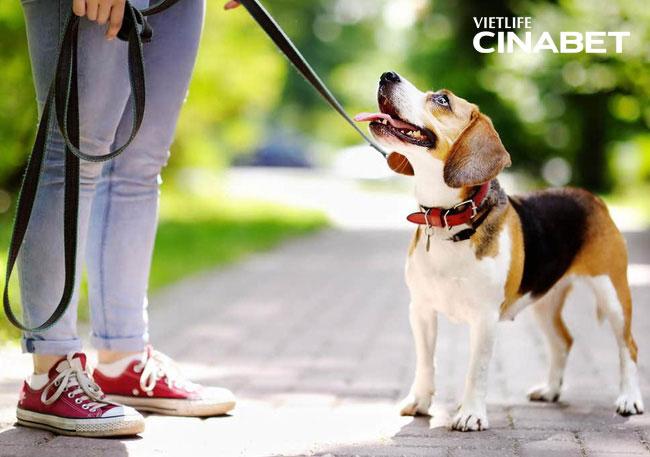 Việc dắt chó đi dạo ngày ngày cũng giúp bạn luyện tập thể dục